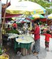 丝绸之路上的植物流动——缅甸篇