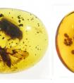 产自缅甸白垩纪琥珀的蜡蝉总科一新科的建立