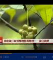 云南卫视:[云南新闻联播]德宏盈江发现植物界新物种——盈江暗罗