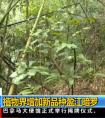 中央电视台:[新闻直播间]云南:植物界增加新品种盈江暗罗