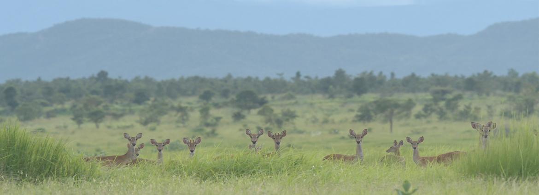 东南亚中心完成缅甸Shwe Set Taw保护区生物多样性本底初步调查