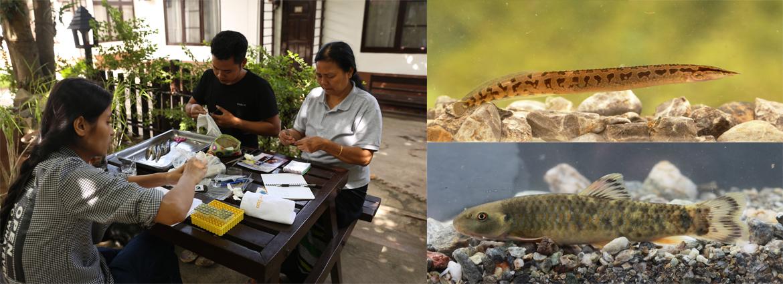 缅甸维多利亚山和茵莱湖水生生物多样性初探