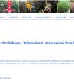 Herminium motuoensis sp. nov. (Orchidaceae, Orchidoideae), a new species from Tibet, China