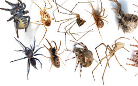 The research result of Tibetan Plateau spider published in journal of Systematic Biology by Prof Shuqiang LI's group