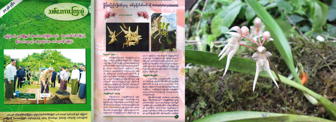 """A new species is reported in """"The Forest Mirror""""Journal Myanmar"""