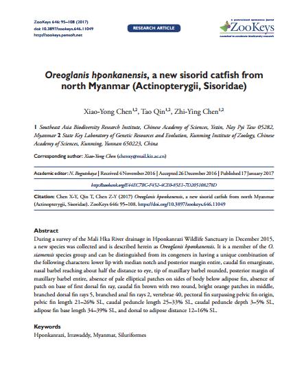 Oreoglanis hponkanensis, a new sisorid catfish from north Myanmar (Actinopterygii, Sisoridae)