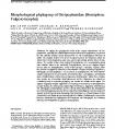 Morphological phylogeny of Dictyopharidae (Hemiptera: Fulgoromorpha)